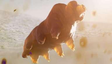 Bọ gấu nước cũng sẽ chịu ảnh hưởng từ biến đổi khí hậu, dù chúng gần như bất tử