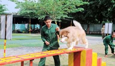 Dịch vụ huấn luyện chó cảnh giá rẻ, chuyên nghiệp